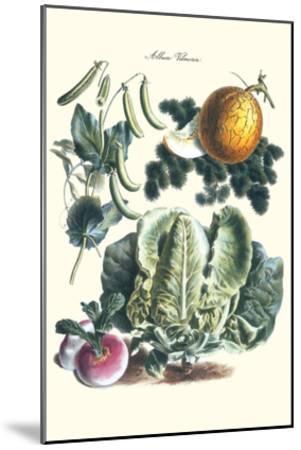 Vegetables; Melon, Lettuce, Green Beans, and Turnips-Philippe-Victoire Leveque de Vilmorin-Mounted Art Print
