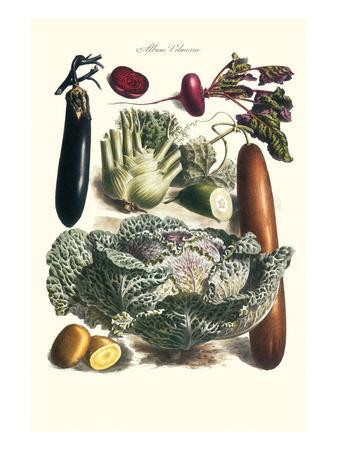 Vegetables; Cucumber, Cabbage, Eggplant, Potato, and Beet-Philippe-Victoire Leveque de Vilmorin-Framed Art Print