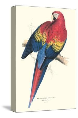 Red and Yellow Macaw - Ara Macao-Edward Lear-Stretched Canvas Print