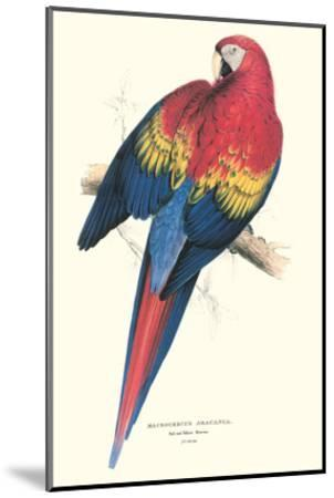 Red and Yellow Macaw - Ara Macao-Edward Lear-Mounted Art Print