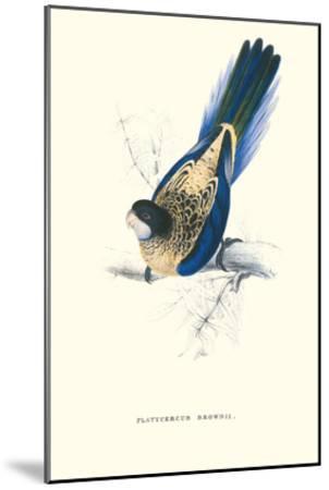 Brown's Parakeet - Platycercus Venustus-Edward Lear-Mounted Art Print
