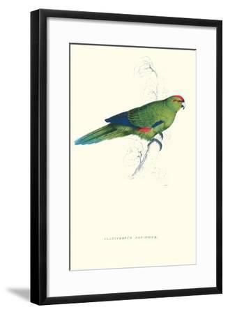 Pacific Parakeet - Cyanorhamphus Novaevelandiae-Edward Lear-Framed Art Print