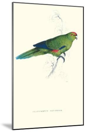 Pacific Parakeet - Cyanorhamphus Novaevelandiae-Edward Lear-Mounted Art Print