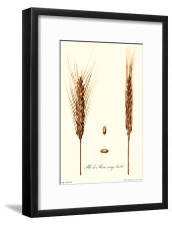 Wheat-Philippe-Victoire Leveque de Vilmorin-Framed Art Print