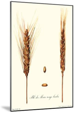 Wheat-Philippe-Victoire Leveque de Vilmorin-Mounted Art Print