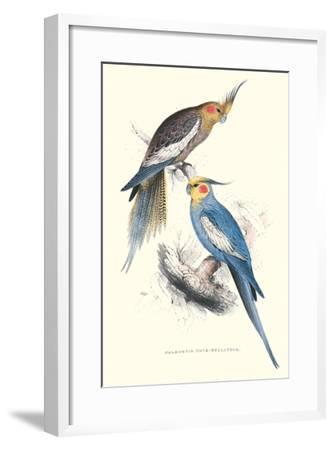 New Holland Parakeets -Nynphicus Hollandicus-Edward Lear-Framed Art Print
