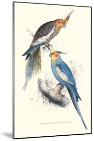 New Holland Parakeets -Nynphicus Hollandicus-Edward Lear-Mounted Art Print