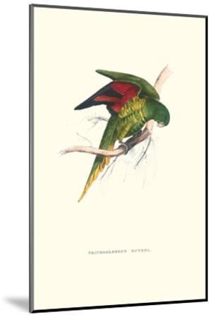 Lesser Maton's Parakeet -Trichoglossus Haematodus-Edward Lear-Mounted Art Print