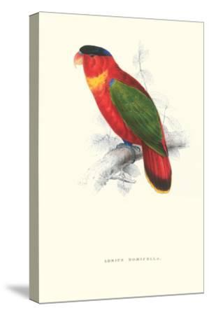 Black-Ccapped Lory - Lorius Domicella-Edward Lear-Stretched Canvas Print