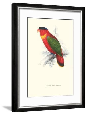 Black-Ccapped Lory - Lorius Domicella-Edward Lear-Framed Art Print