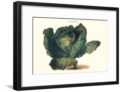 Cabbage-Philippe-Victoire Leveque de Vilmorin-Framed Premium Giclee Print