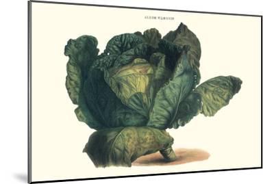 Cabbage-Philippe-Victoire Leveque de Vilmorin-Mounted Premium Giclee Print
