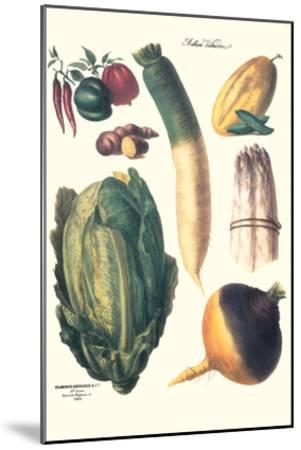 Vegetables; White Asparagus, Spago, Peppers, Cabbage, Turnip-Philippe-Victoire Leveque de Vilmorin-Mounted Art Print