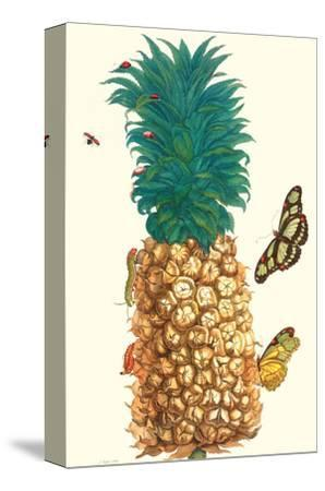 Butterfly and Beetle on a Pineapple-Maria Sibylla Merian-Stretched Canvas Print