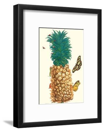 Butterfly and Beetle on a Pineapple-Maria Sibylla Merian-Framed Premium Giclee Print