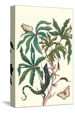 Peacock Butterfly with a Lizard-Maria Sibylla Merian-Stretched Canvas Print