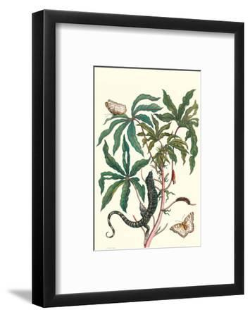Peacock Butterfly with a Lizard-Maria Sibylla Merian-Framed Premium Giclee Print