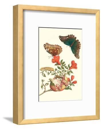 Pomegranate and Butterflies-Maria Sibylla Merian-Framed Premium Giclee Print