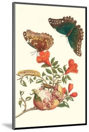 Pomegranate and Butterflies-Maria Sibylla Merian-Mounted Premium Giclee Print