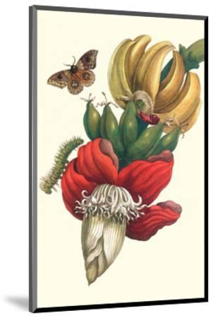 Banana Tree and Moths-Maria Sibylla Merian-Mounted Premium Giclee Print