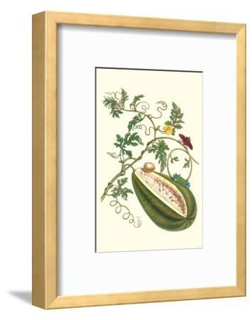 Watermelon and Slug Moth-Maria Sibylla Merian-Framed Premium Giclee Print