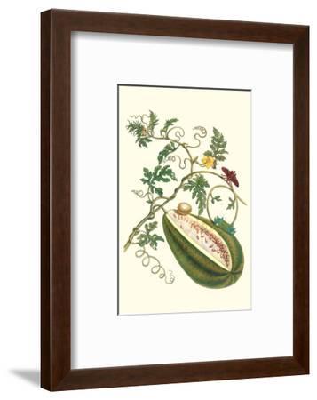 Watermelon and Slug Moth-Maria Sibylla Merian-Framed Premium Giclee Print