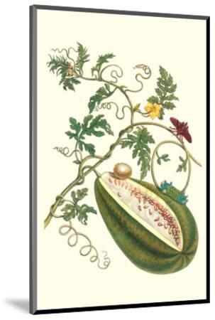 Watermelon and Slug Moth-Maria Sibylla Merian-Mounted Premium Giclee Print