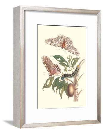 Limbo Tree with Owlet Moth-Maria Sibylla Merian-Framed Art Print