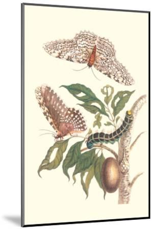 Limbo Tree with Owlet Moth-Maria Sibylla Merian-Mounted Art Print