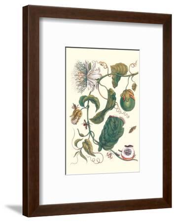 Passion Flower with Leaf-Footed Plant Bug-Maria Sibylla Merian-Framed Premium Giclee Print