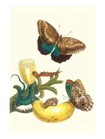 Banana Plant with Teucer Giant Owl Butterfly and a Rainbow Whiptail Lizard-Maria Sibylla Merian-Premium Giclee Print