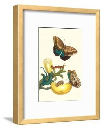 Banana Plant with Teucer Giant Owl Butterfly and a Rainbow Whiptail Lizard-Maria Sibylla Merian-Framed Premium Giclee Print