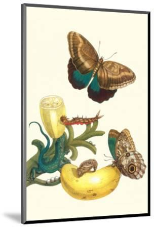 Banana Plant with Teucer Giant Owl Butterfly and a Rainbow Whiptail Lizard-Maria Sibylla Merian-Mounted Premium Giclee Print