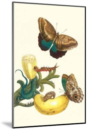 Banana Plant with Teucer Giant Owl Butterfly and a Rainbow Whiptail Lizard-Maria Sibylla Merian-Mounted Art Print