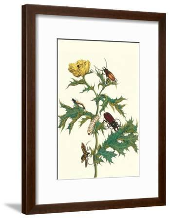 Mexican Prickly Poppy a Longhorned Beetle and an Elateridae Beetle Larva-Maria Sibylla Merian-Framed Art Print