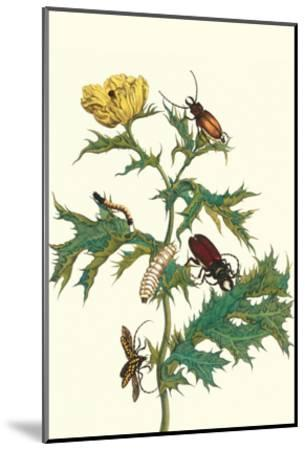 Mexican Prickly Poppy a Longhorned Beetle and an Elateridae Beetle Larva-Maria Sibylla Merian-Mounted Art Print