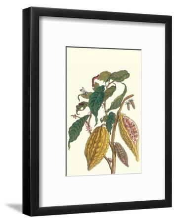 Cocoa Plant with Southern Army Worm-Maria Sibylla Merian-Framed Premium Giclee Print