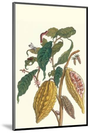 Cocoa Plant with Southern Army Worm-Maria Sibylla Merian-Mounted Premium Giclee Print