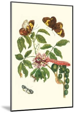 Leguminous Plant with a Sophorae Owl Caterpillar and an Aegle Clearwing Butterfly-Maria Sibylla Merian-Mounted Art Print