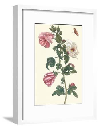 Roselle with Fall Webworm-Maria Sibylla Merian-Framed Art Print