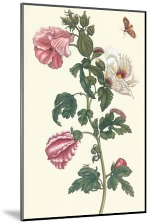 Roselle with Fall Webworm-Maria Sibylla Merian-Mounted Art Print