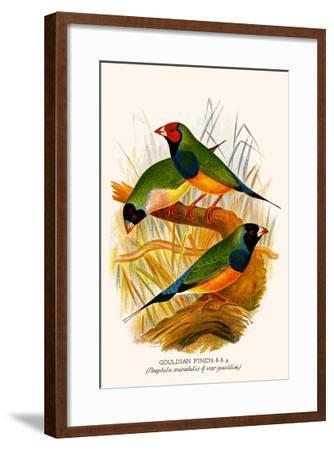 Gouldian Finch-F^w^ Frohawk-Framed Art Print