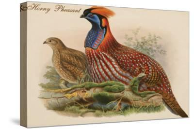 Horny Pheasant-John Gould-Stretched Canvas Print