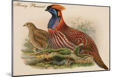 Horny Pheasant-John Gould-Mounted Art Print