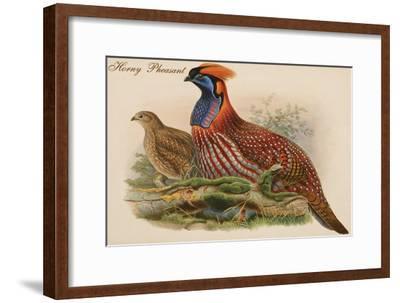 Horny Pheasant-John Gould-Framed Art Print