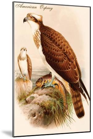 American Osprey-John Gould-Mounted Art Print