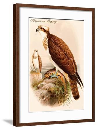 American Osprey-John Gould-Framed Art Print