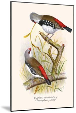 Diamond Sparrow or White Headed Finch-F^w^ Frohawk-Mounted Art Print