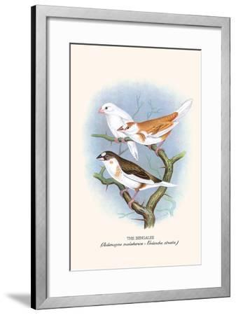 Bengalee-F^w^ Frohawk-Framed Art Print