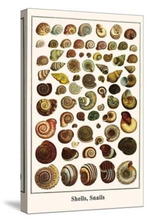 Shells, Snails-Albertus Seba-Stretched Canvas Print